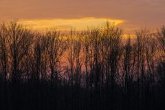 Evening sky behind trees Stock Image