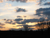Evening sky. Evening  sky with dark clouds and silhouettes of trees Stock Photo