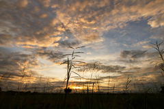 Evening sky. Silhouette grass under Evening sky with nimbus cloud at sunset and twilight time Stock Images