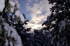 Evening sky before sunset surrounded by forest snow-covered fir trees royalty free stock photo