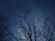 Evening sky tree. royalty free stock images