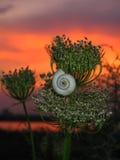 Evening Snail stock photo