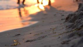 Evening spacer wzdłuż wybrzeża zbiory wideo