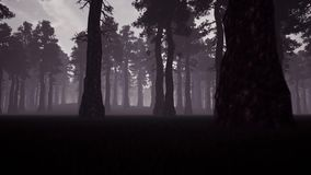 Evening spooky forest 3d realistic footage