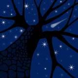 Evening Stars. Tree silhouette against an evening sky Royalty Free Stock Photography