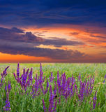 Evening in steppe Stock Photos