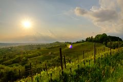 Evening storm in the vineyards. Storm in the vineyards of Friuli Venezia-Giulia, Italy stock photography