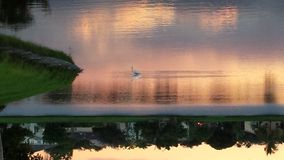 An evening stroll. Egret in lake at sunset Royalty Free Stock Photography