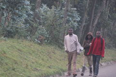 An evening stroll. Teenagers walking home  in the evening on the road in  rural area of Rwanda Stock Photos