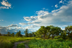 Evening summer landscape Stock Images