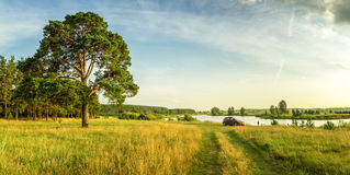 Evening summer landscape with lush pine tree on the banks of river and dirt road, Russia, Ural Stock Photos