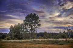 Evening summer landscape Royalty Free Stock Photography