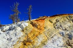 Geyserite Deposits and Colourful Algae at Mammoth Hot Springs, Yellowstone National Park, Wyoming. Evening sun brings out the structures and colors of the stock photos