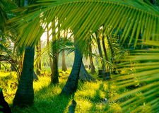 Evening sun in a misty rainforest Royalty Free Stock Photos
