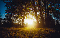 Evening sun shining through trees at forest Stock Photo