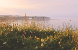 Evening sun Stock Images
