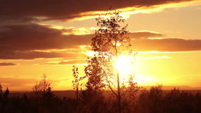 Evening sun and tree silhouette. Evening sky and sun with birch tree silhouette in foreground stock video