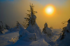 Evening sun in winter mountains. Sunset sun has illuminated snow covered hill and little fir-trees. Calm. Sun Shines through  semitransparent cloud (or fog Royalty Free Stock Photo