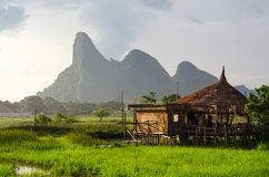 Evening sunlight, Bamboo hut& x28;Cottage& x29; on green rice fields. The royalty free stock image