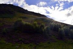 Evening sunlight on Scottish hillside, Perthshire, Scotland Royalty Free Stock Photography