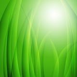 Evening sunlight in tall green grass. Background Stock Photo