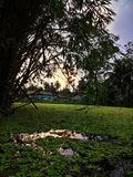 Evening sunset with bamboo over a pond in a village. Village scenes with pond and evening sky royalty free stock photos