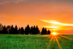 Evening sunset on the field Stock Photo