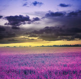 Evening sunset sky and meadow Stock Photo