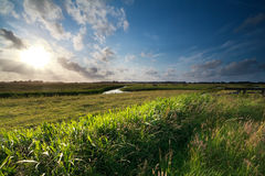 Evening sunshine over green meadows Royalty Free Stock Images