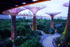 Evening supergrove trees in Gardens By the Bay Royalty Free Stock Photos