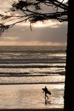 Evening surfer. Surfer heading out to surf in the Pacific ocean on the west coast of Vancouver Island Stock Images