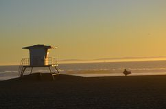 Evening Surfing. Sunset at Huntington Beach, Ca Royalty Free Stock Photography
