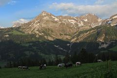 Evening in the Swiss Alps Royalty Free Stock Photography