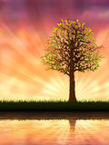Evening tree. Reflecting in calm water (vector image, other trees are in my gallery Stock Image