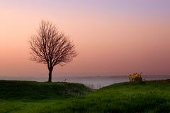 Evening tree Stock Photos