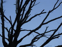Evening tree blue sky Stock Photos
