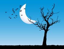 Evening tree landscape. Lonely tree with blue evening sky and moon Stock Image
