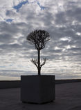 Evening tree silhouette with clouds Royalty Free Stock Photography
