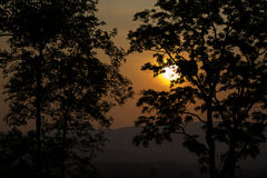 In the evening, the tree silhouette, very beautiful Royalty Free Stock Photography