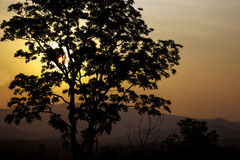 In the evening, the tree silhouette, very beautiful Royalty Free Stock Photos