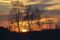 The In the evening, the trees silhouette, very beautiful royalty free stock photography