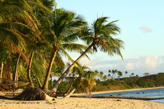 Evening on a tropical virgin beach. Fiji Stock Images