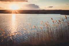Evening twilight and marshy pond Stock Image