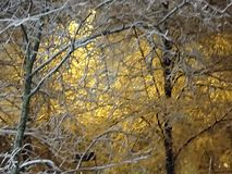 First snow, Nice view on the narrow walking way in autumn. In the evening, under the lamp, Nice view on the narrow walking way in autumn just beside the sea in Stock Image