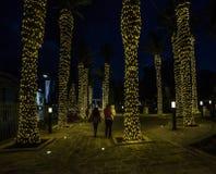 Evening Victoria. The island of Gozo. Malta. Christmas on the island of Gozo in the capital of Victoria in Malta. Palms in the Lights Stock Photos