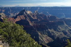 Evening View Of The Grand Canyon From The North Rim Stock Photography