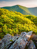 Evening view of Hawksbill Mountain, from Betty's Rock in Shenand Stock Photos
