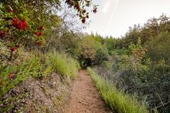 Evening view of hiking trail in Villa Montalvo County Park, Saratoga, South San Francisco bay area, California. Evening view of hiking trail in Villa Montalvo stock photos