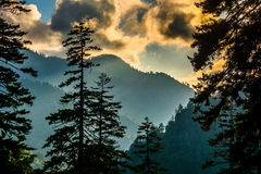 Evening view through pine trees from an overlook on Newfound Gap Stock Images