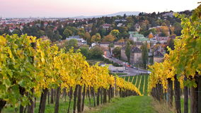 Evening view from vineyards in Vienna. Beautiful sunset time-lapse in the suburban vineyards of Vienna in autumn. Evening cityscape in the background. Day to stock video